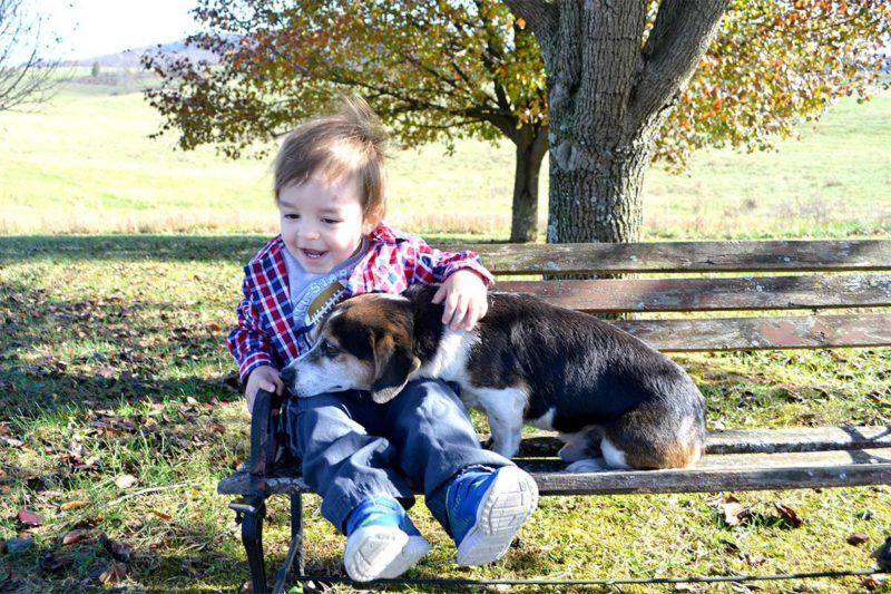 boy and his beagle