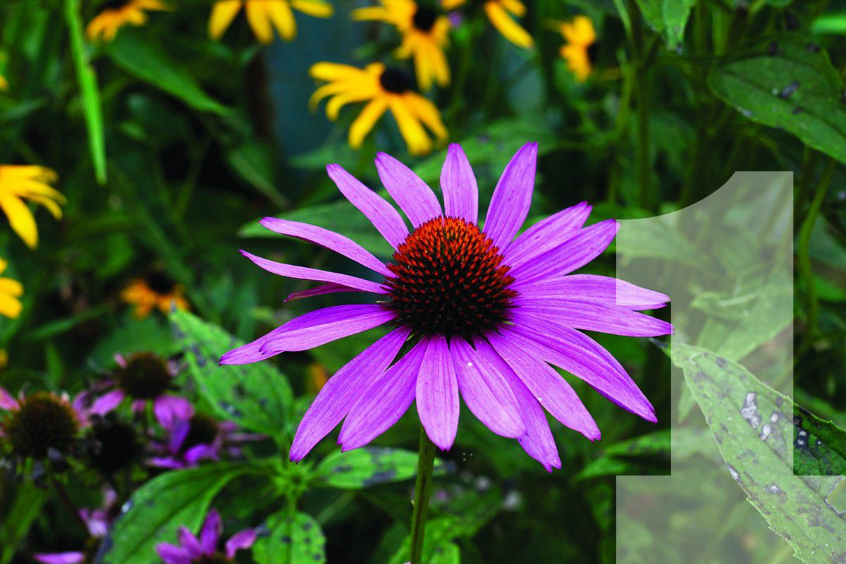 Top 10 Tough Plants For Southern Gardens Kentucky Living