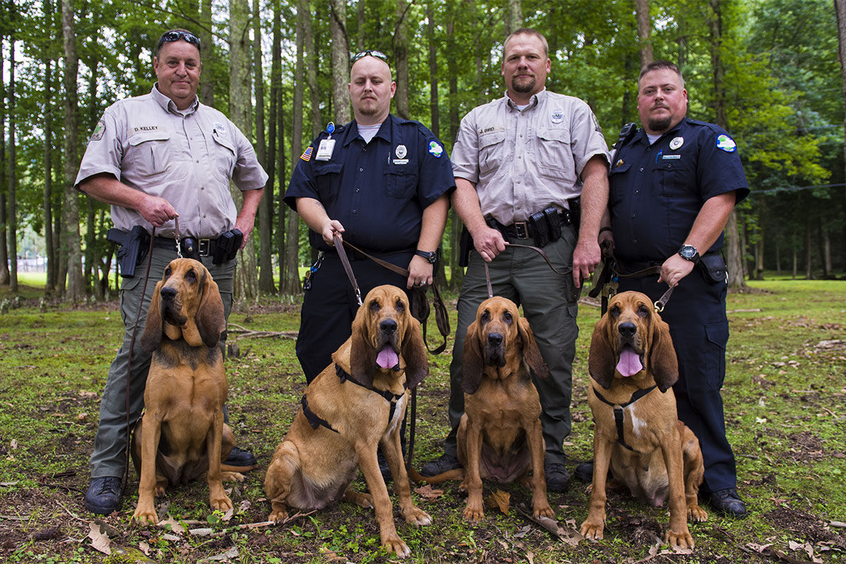 Arsonist-Sniffing-Dogs
