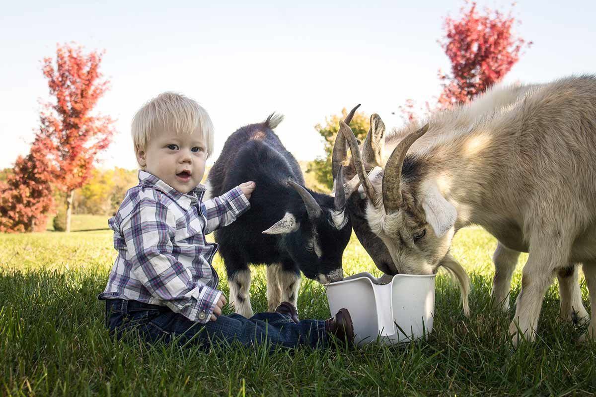 Tate Thompson enjoying the goats at Southern Grace Bed and Breakfast, Sip 'n' stay Bourbon Country