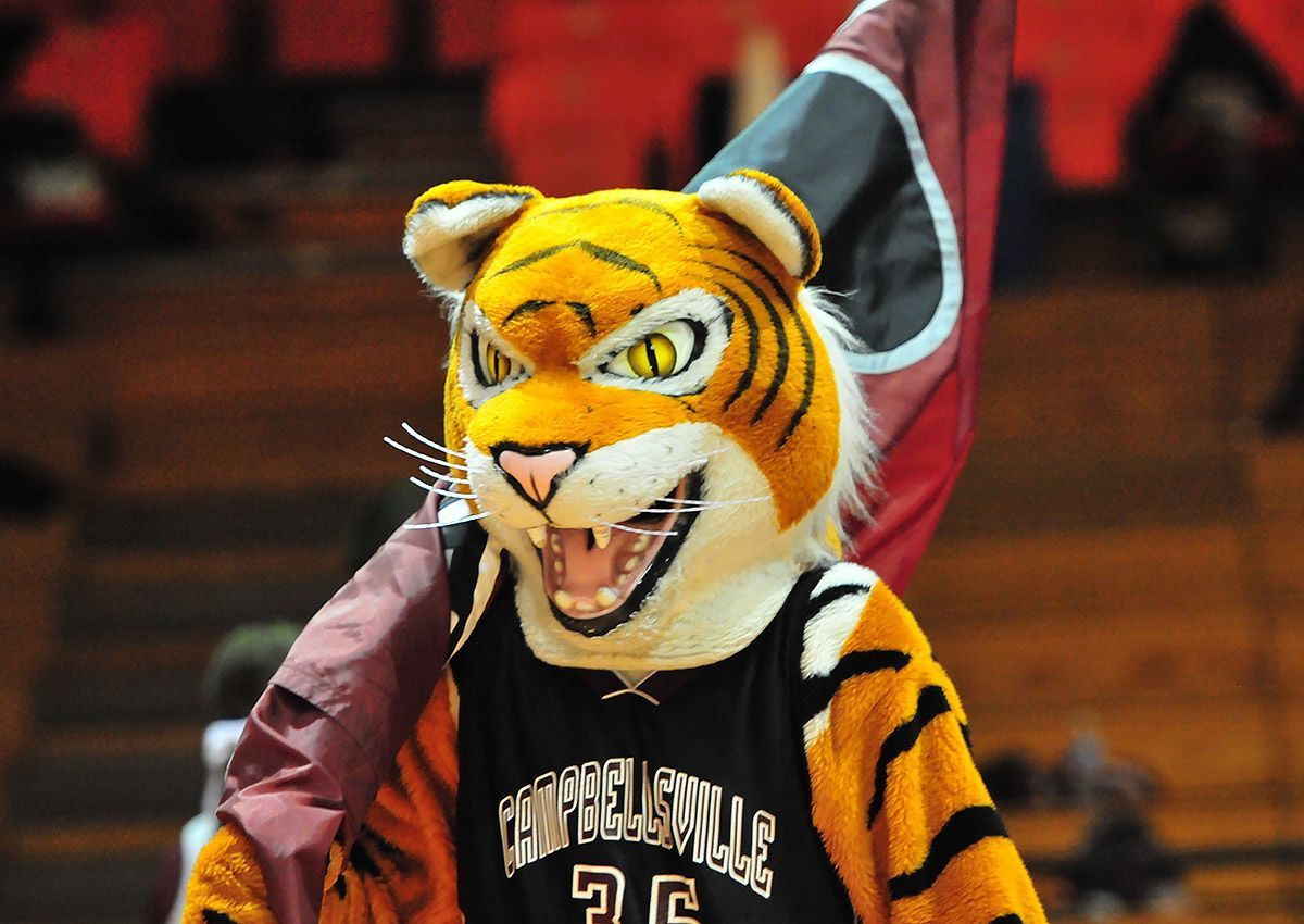 campbellsville-university-tiger-4