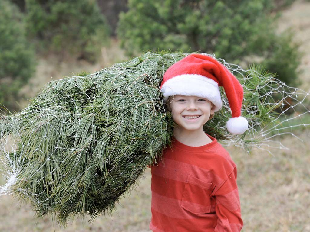 Where Christmas Trees Grow - Kentucky Living