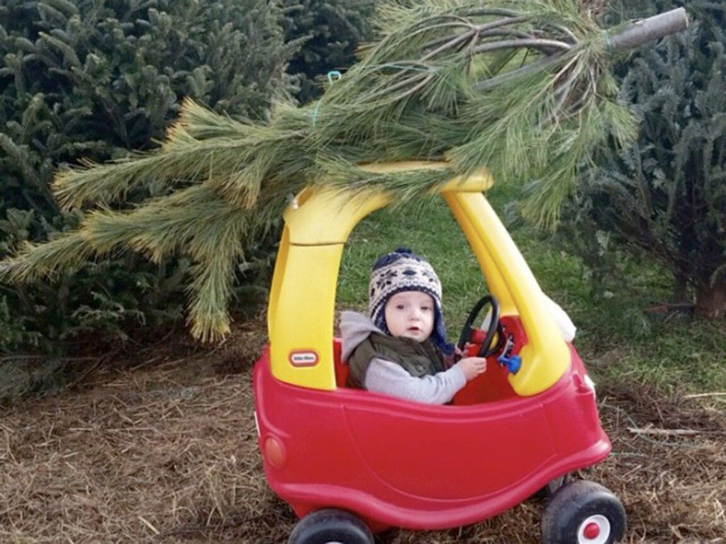 baldwin-tree-farm