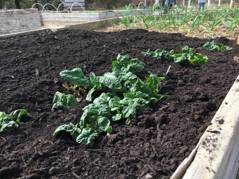 Smart Gardens & Landscapes: Organic Gardening
