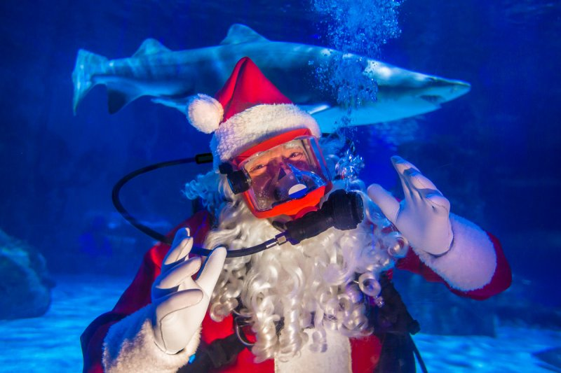 Scuba Santa's Water Wonderland at Newport Aquarium