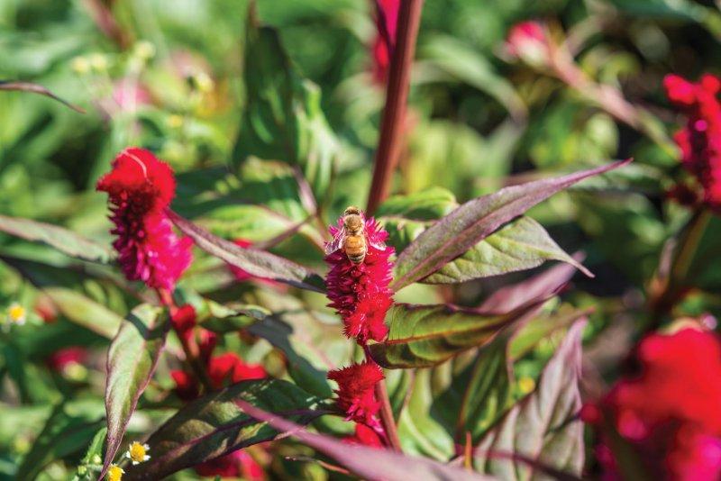 Plant Walk Series: Pollinator Meadow