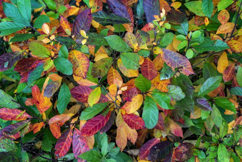 Fall Flora Plant Identification Stroll